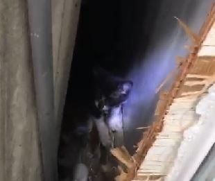 小貓卡在樑柱縫隙內,經食物引誘才救出。(記者鄭名翔翻攝)