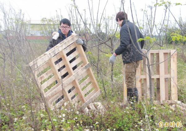 亞洲大學學生要用100塊木棧板,打造台西村新景點。(記者陳冠備攝)