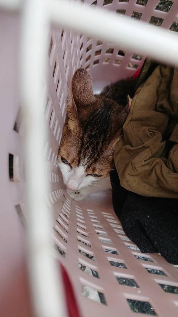 嘉義市消防局特種搜救隊在雲門翠堤大樓救出1隻飽受驚嚇的家貓。(記者丁偉杰翻攝)