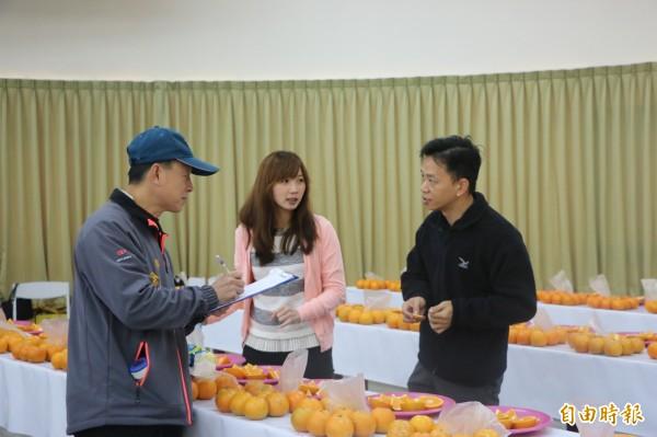 頭份市農會昨舉辦柑橘評鑑,今年桶柑風味足甜度夠,可望衝出銷量。(記者鄭名翔攝)