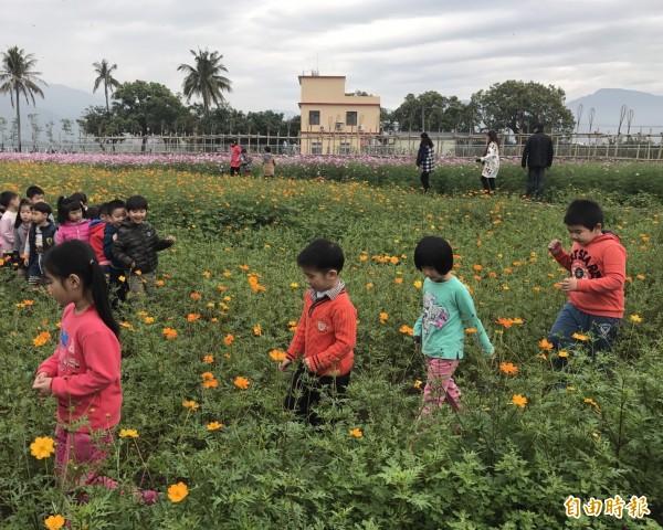 美濃花田今年持續綻放,歡迎民眾過年期間前往賞花吃美食。(記者黃佳琳攝)