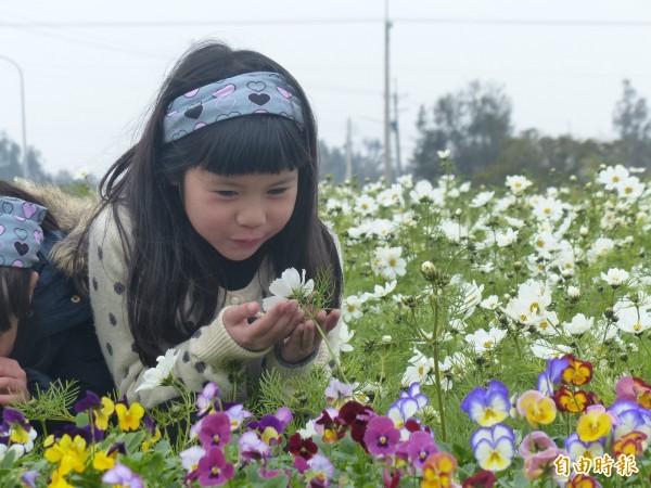 金門養工所旁之花海區,有花景可供拍照,但花香則各人感受不同,這名小朋友聞到味道,直言這味道「怪怪的」。(記者吳正庭攝)
