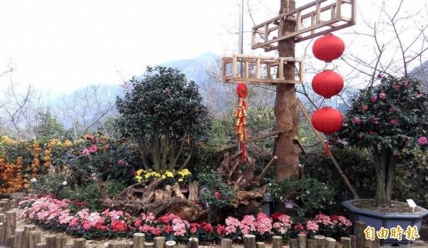 台大實驗林管處舉辦鳳麓茶馨茶花展,五顏六色的花朵,美不勝收。(記者謝介裕攝)