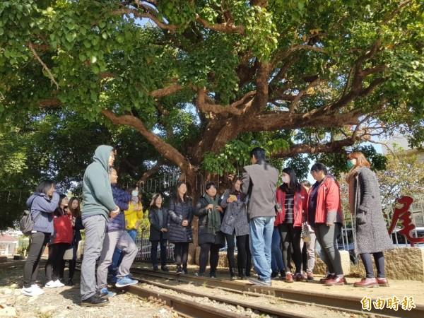 虎尾糖廠茄苳夫妻樹,讓雲林家扶社工見證百年「伉儷情深」。(記者廖淑玲攝)