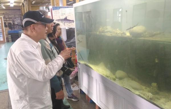 王功海洋故事館誕生4隻小灰貂鯊,吸引不少民眾眼光。(王功海洋故事館提供)