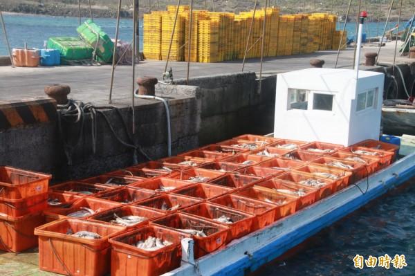 五德養殖場清理出的死魚,用舢舨船運輸讓人怵目驚心。(記者劉禹慶攝)