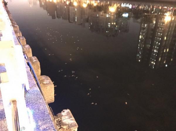 一陣春雨後,運河又見魚屍。(議員李文正提供)