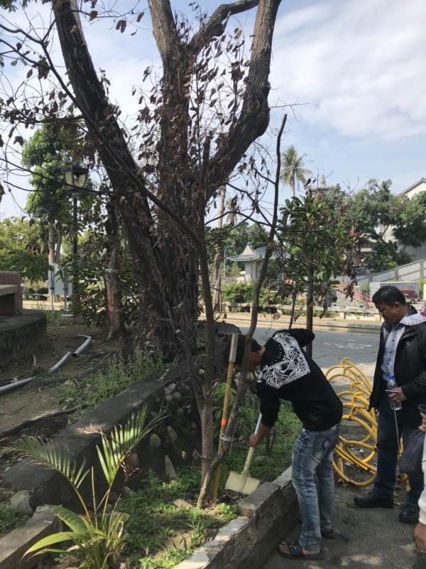 竹溪整治「築夢之溪」,區內老樹重新配置至適合的位置,樹醫生檢視老樹狀況。(圖由南市水利局提供)