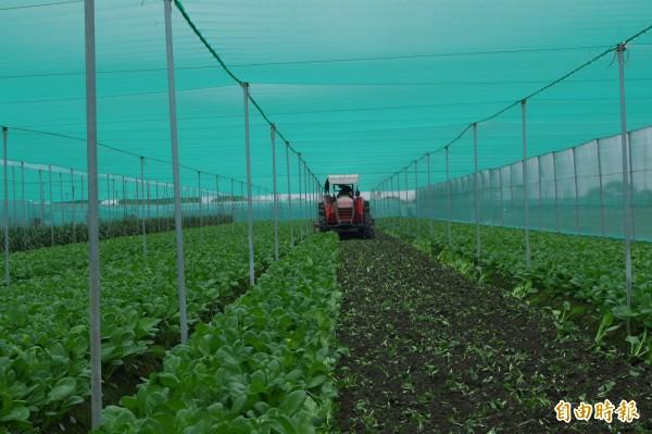 農民耕鋤務必先向農會、合作社登記申請,每公頃補助7萬5000元。(記者林國賢攝)