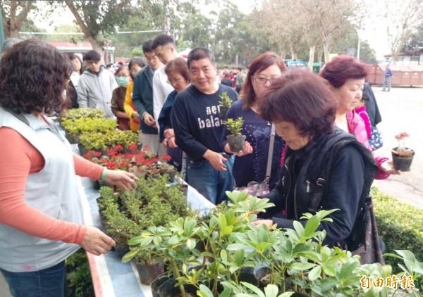 提前掃墓還可領小盆栽!新竹市政府鼓勵民眾提前掃墓祭祀,今年延續去年政策,並加碼到連續4週共8天都送小盆栽,每日700份,送完為止。(記者洪美秀攝)
