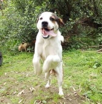 基隆市消防局仁愛消防分隊收養流浪犬,日前被送至基隆市寵物銀行,市長林右昌接獲市民反映,今天決定將認養,並取名為林吉米。(圖為基隆市政府提供)