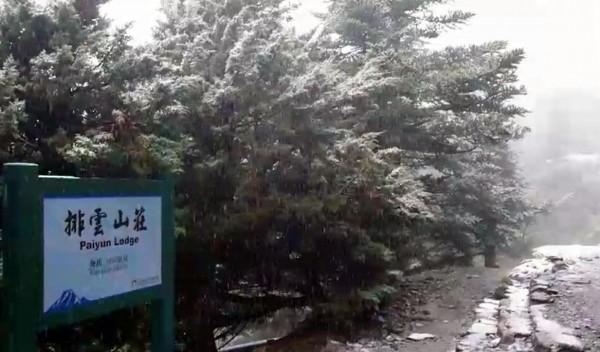 玉山排雲山莊因冷氣團來襲,今日也下雪,令山友驚喜不已。(記者謝介裕翻攝)