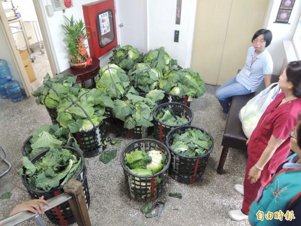 高麗菜向屏東高樹、三地門採購。(記者黃旭磊攝)