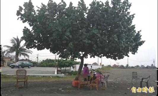 居民在市境之南樹下乘涼賞景。(記者洪臣宏攝)