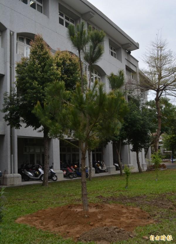 太平國小慶祝百週年校慶,廖丹妙老師捐贈6棵琉球松種在校園。(記者陳建志攝)