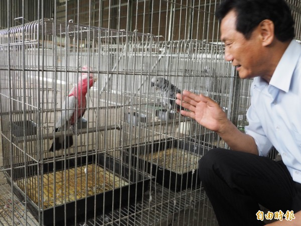 已通過環評的鳥園,鸚鵡就有100多種。(記者陳鳳麗攝)