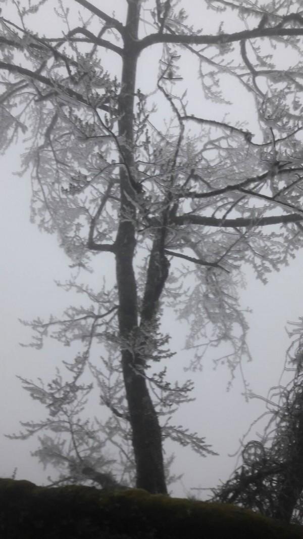 太平山今天清晨一度降到零下1度,處處可見霧淞美景。(記者江志雄翻攝)