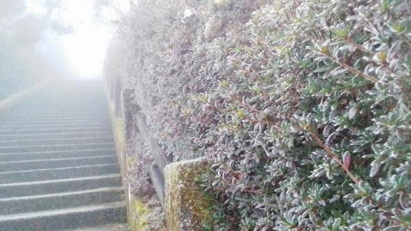 太平山的霧淞。(記者江志雄翻攝)
