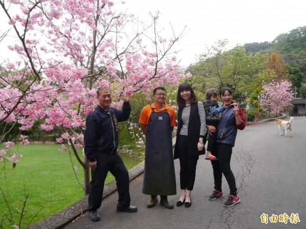 后里區仁里山區橘祥合院吉野櫻盛開,是后里賞櫻秘境。(記者張軒哲攝)