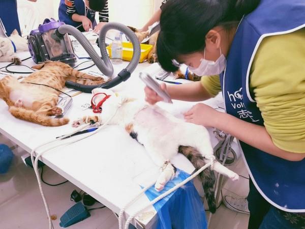 台中市府舉行犬貓絕育3合1活動。(記者張軒哲翻攝)