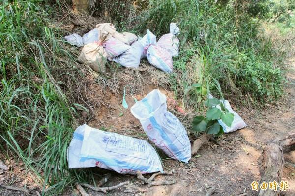 彰化市八卦山區一處荔枝園遭偷倒上百包不明物體,果農懷疑是有毒廢爐渣。(記者湯世名攝)