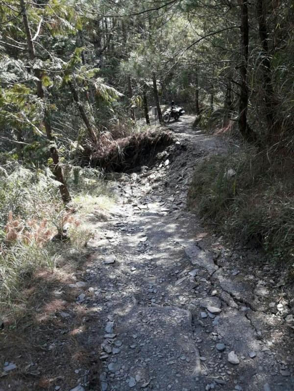 能高越嶺道西段的大崩塌也導致約有100公尺的路基下陷逾1.5公尺。(圖:林務局南投林管處提供)