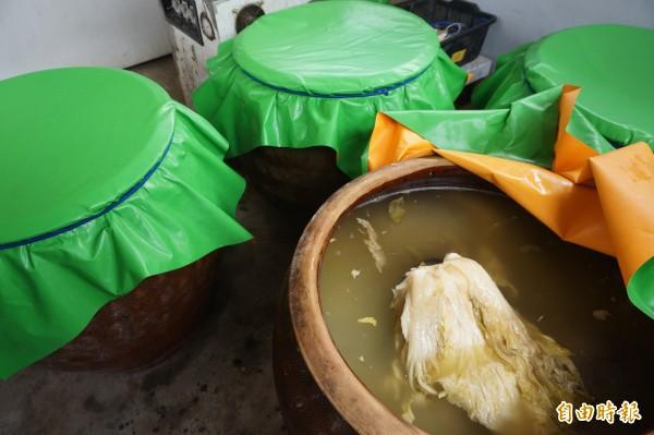 「爐廣眾快樂農場」的酸菜白採用天然醃製,30天自然發酵熟成才可食用。(記者歐素美攝)
