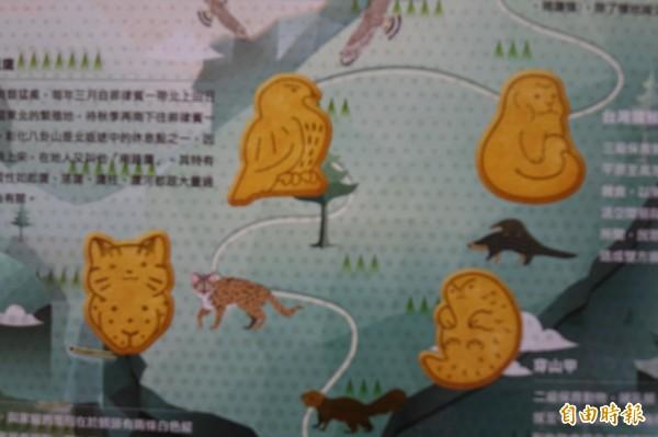 台灣優格餅乾學院今年不惜成本,為「鷹揚八卦」特製禮盒,開模生產灰面鵟鷹、石虎、穿山甲等淺山動物造型餅乾。(記者劉曉欣攝)