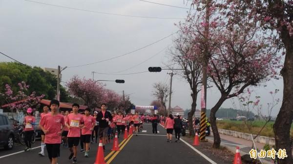 土庫櫻花路跑讓跑友不必到日本就能置身在浪漫粉紅世界中。(記者廖淑玲攝)