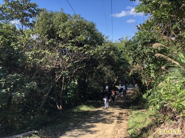 由於桃園市沒有訂定護樹自治條例,開發山區時也經常引發護樹團體抗議,圖為五酒桶山步道。(記者陳昀攝)