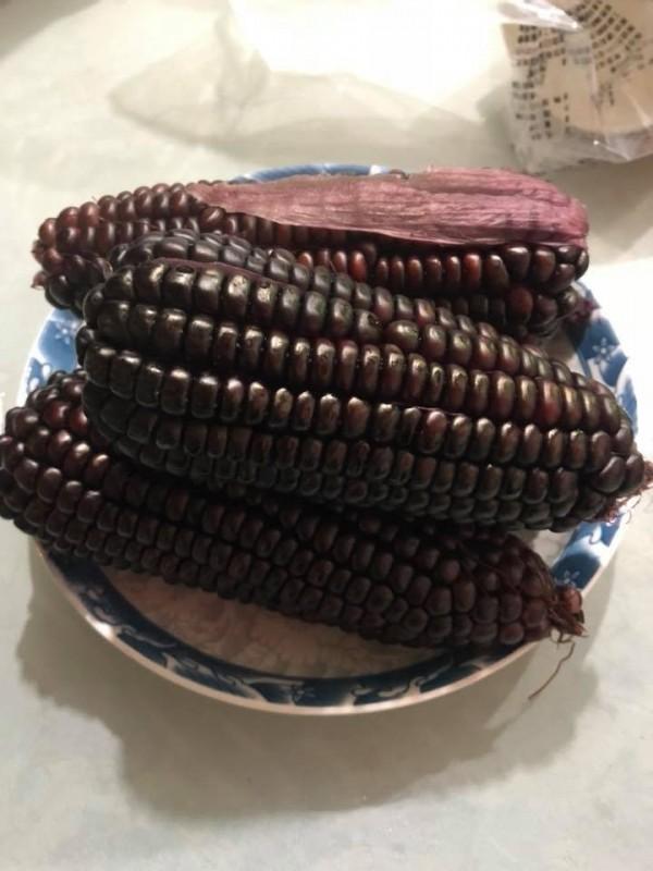 「黑寶甜珍珠」玉米有夠黑。(戴光宗提供)