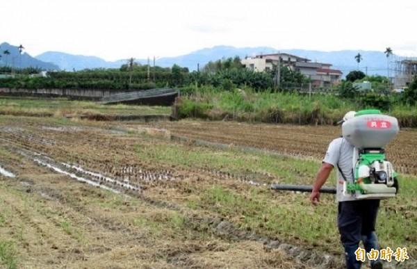南投縣農友在稻田噴灑益菌肥,讓稻草儘快腐化增加地力。(資料照)