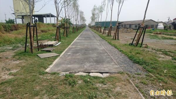 新營天鵝湖到後壁菁寮的糖鐵自行車道,後段菁寮完工一部分。(記者楊金城攝)