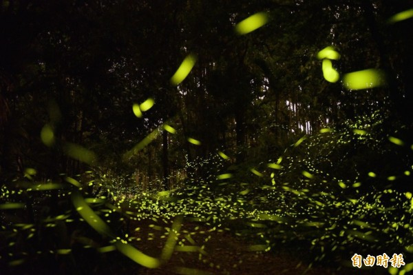 暖暖水源地是西勢水庫重要的水源保護區,每年4到6月繁殖季節,都能欣賞到螢火蟲大爆發的美景。(記者林欣漢攝)
