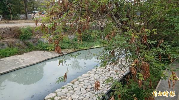 竹溪綠廊。(記者洪瑞琴攝)