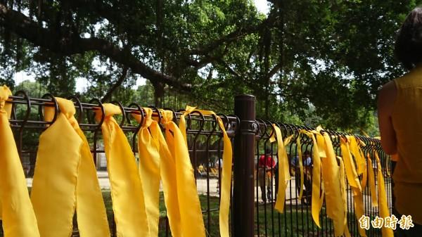成大校園自主行動聯盟在成大榕園繫黃絲帶。(記者洪瑞琴攝)
