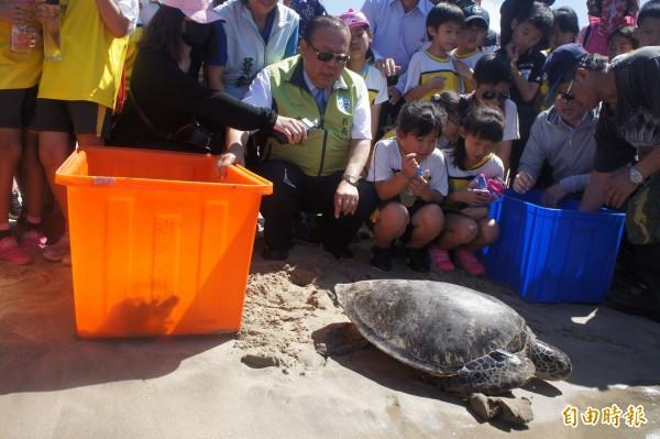 澎湖縣長陳光復率領下一代學子,在馬公嵵裡沙灘野放海龜。(記者劉禹慶攝)