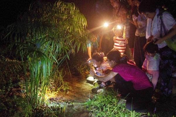 池南自然教育中心將在6月舉辦2梯次「蛙蛙新樂園」活動,邀民眾一起參與蛙蛙界的年度盛事,探索夜間森林中的豐富青蛙生態。 (花蓮林管處提供)