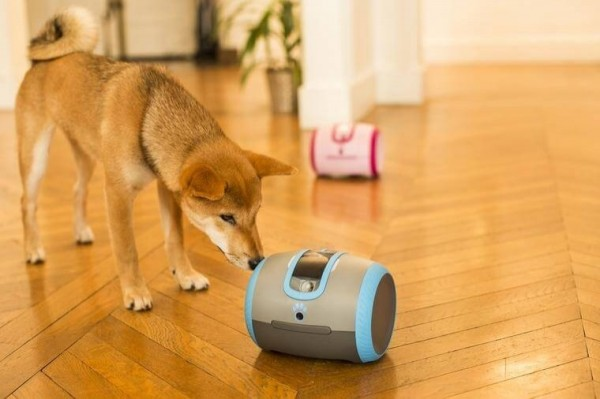 CamToy為寵物開發出機器玩伴「蕾卡」,以緩解牠們的孤單,也改變主人生活,從此不管人在哪裡,都能和心愛寵物互動。(Garage+ 提供)