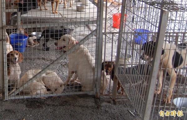 翁女2人為減少流浪犬問題,未經飼主同意將母狗結紮後送還,法官認為不構成竊盜。示意照。 (記者李立法攝)
