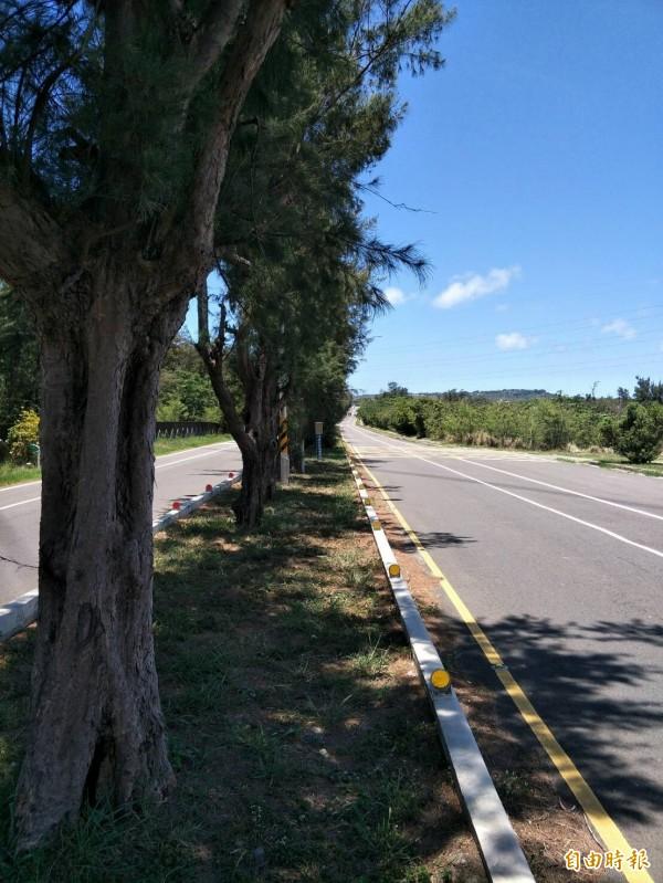 在地居民認為,南光路路中央的木麻黃遮蔽視線。(記者蔡宗憲攝)