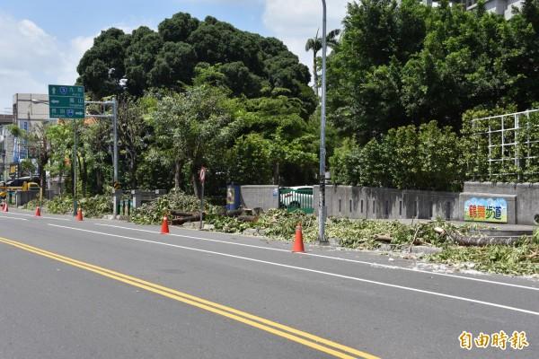鶴聲國小整排的老木棉樹全被砍除了。(記者葉永騫攝)