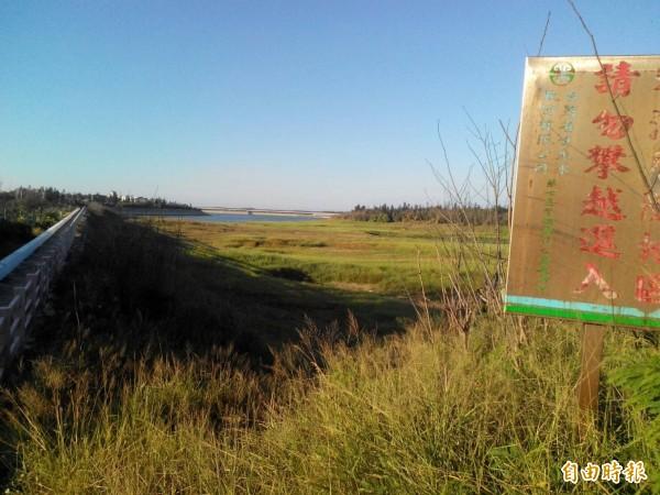 澎湖成功水庫乾涸處形成草原。(記者陳文嬋攝)