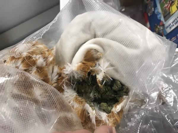 檢警及海關在國際郵件包裹的填充玩具內查獲1.7公斤的大麻花毒品,市價達250萬元。(記者姚岳宏翻攝)