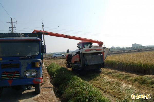 雲林一期稻作開始收割,農民憂價格低。(記者林國賢攝)