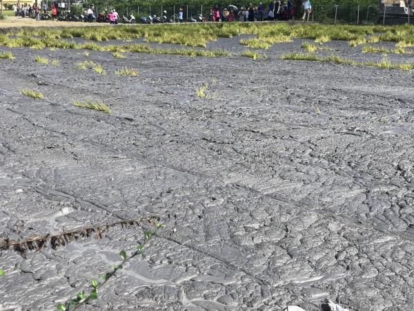 萬丹泥火山每次噴發後,大量泥漿淹沒農田。(記者侯承旭翻攝)