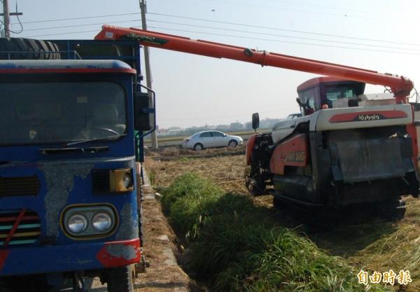 擔心致災性梅雨侵襲,農民搶割一期稻作。(記者林國賢攝)