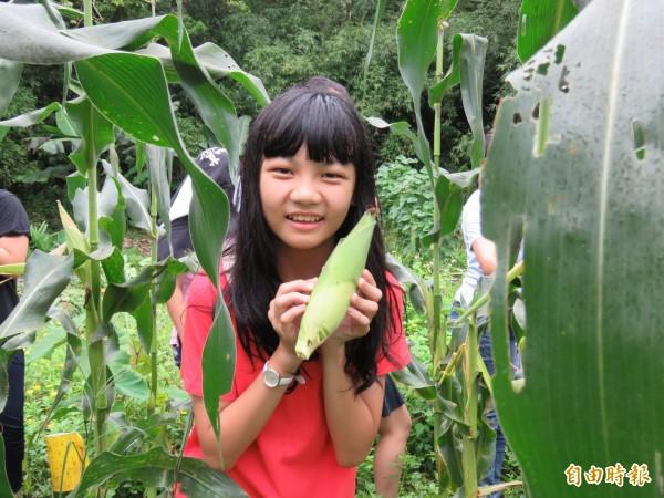 基隆市隆聖國小學生,開心地採收自己種植的水果玉米。(記者俞肇福攝)