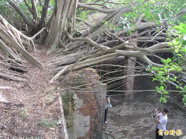 老樹與老屋共生,安平樹屋是打卡熱點。(記者洪瑞琴攝)