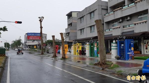 台東市興安路部分小葉欖仁路樹被從5樓高的大樹修成1樓高的電桿。(記者黃明堂攝)